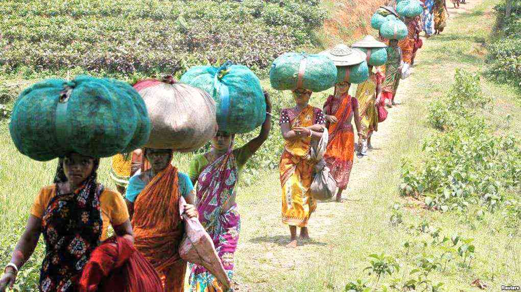Tea Workers' Strike in West Bengal